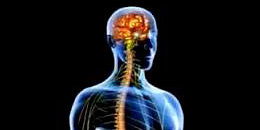 brain-n-spine